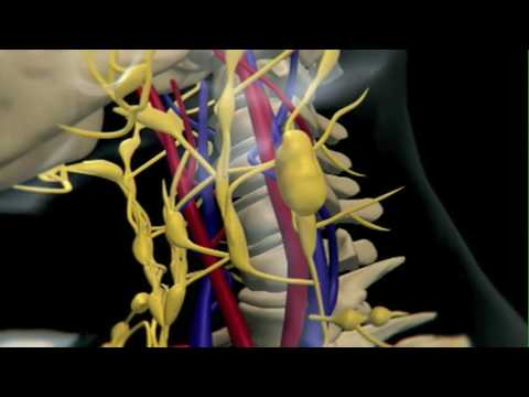 An Animation Explaining the Development of Lymphoma