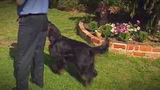 ADVANCE Puppy Care - Jumping Puppies