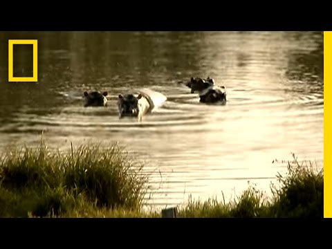 0 Hippo Video