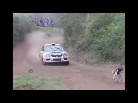 Crazy Evo Jumps Over Lucky Dog