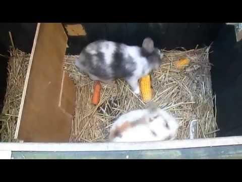 Onze konijnen Daan en Bram. 22 juli 2012.