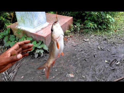 Video Epic fishing with my DAD in Khalna download in MP3, 3GP, MP4, WEBM, AVI, FLV January 2017