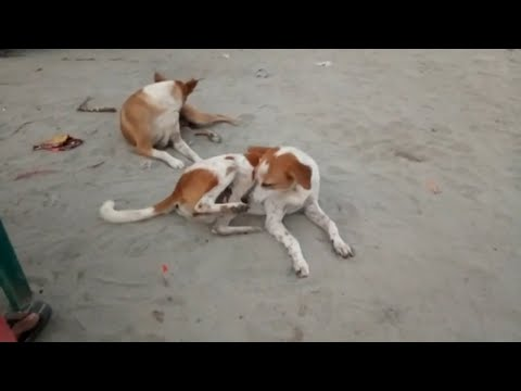 Dog's itching | Village dogs are itching | dogs   | Dogs relaxation | dogs bite | dogs in trouble