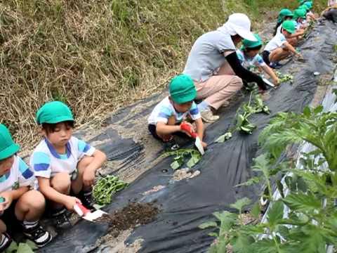 サツマイモの苗植えつけ体験〜早島幼稚園東分園の園児