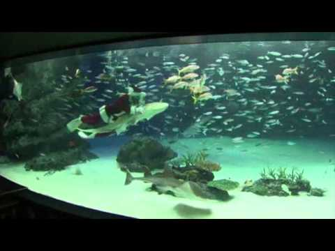 santa - Even Santa Claus enjoys a swim. At the Tokyo Aquarium, children watched as a diver dressed up as Santa Claus fed fish inside a tank and hugged the aquarium's...