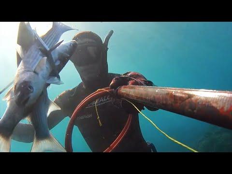 Chasse sous marine - Triplé de mulet par petit fond 2016