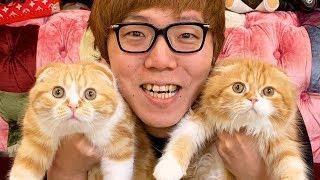 初!まるお& もふこ と生配信!【ヒカキンTV】
