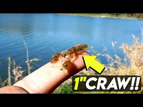 Video Micro Fishing w/ TINY Larva Baits CHALLENGE!!! (Surprise Catch) download in MP3, 3GP, MP4, WEBM, AVI, FLV January 2017