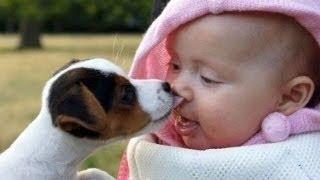Hunde Und Babies Sprechen Miteinender [HD VIDEO]