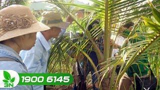 Trồng trọt | Cách diệt bọ cánh cứng hại cây dừa bằng