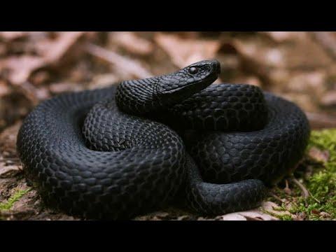 Осторожно змеи Брачный период начался - DomaVideo.Ru