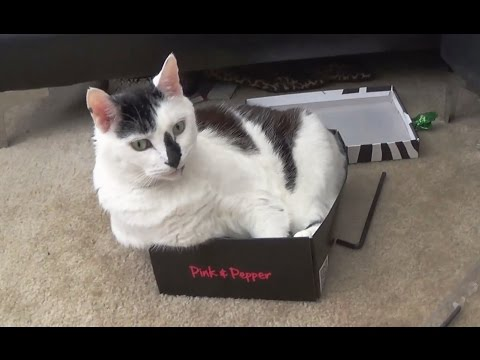 Video Cuteness: Big Cats In Small Boxes