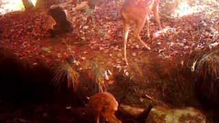 <h5>Trail cam by the river Jun - Sept 2015</h5>