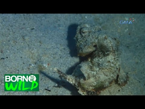 Born to be Wild: Doc Nielsen searches for a mysterious fish in Padre Burgos, Leyte