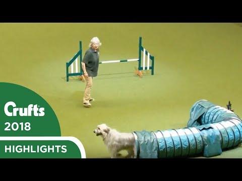 Kratu-koira valloitti sydämet vapaalla tyylillään Crufts 2018 agilitykilpailussa