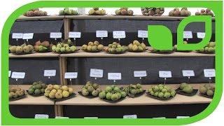 Apfelausstellung in Malvern