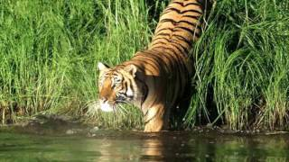 Gosaba India  city images : Sundarban, sundarban tour, sundarban tourism.