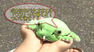 根羽夢物語~with カエル~
