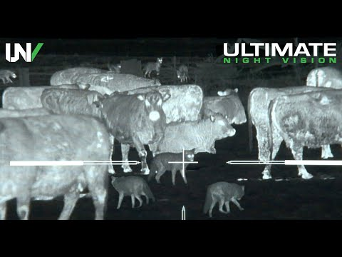 Download Thermal Predator Hunting | 45 Coyotes Down with the IR Hunter MKIII 35mm