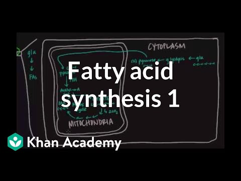 Fatty Acid Synthesis - Part I