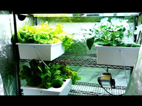 New Hydroponic Grow Tent Setup - Cucumber Plants Spreading! on Grow Aquaponically & New Hydroponic Grow Tent Setup - Cucumber Plants Spreading! on Grow ...