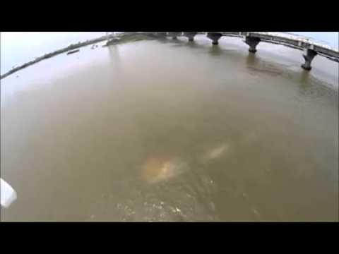 Monstruo en el Rio Coatzacoalcos