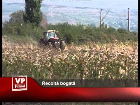 Recoltă bogată