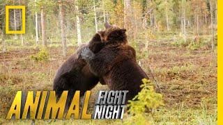 Brown Bear Battle: It's On! | Animal Fight Night by Nat Geo WILD