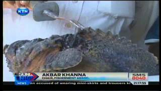 News : Venomous Fish Found In Mombasa