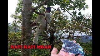 Download Video Nekat si mbah naik pohon tinggi banget hanya untuk sarang burung ini MP3 3GP MP4