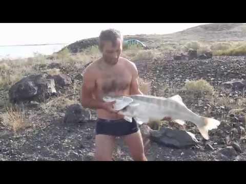 как поймать рыбу на балхаше