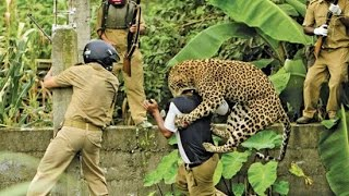 Video Leopard Attacks Tourist MP3, 3GP, MP4, WEBM, AVI, FLV November 2018
