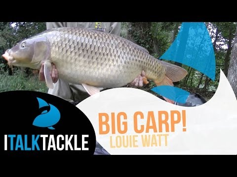 *Customer Video* 40lb+ Carp, May 2016