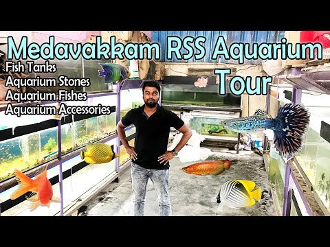 ???? ??????? ????? | Medavakkam RSS Ornamental fish Aquarium Shop Tour | Price Details_Akvárium. Heti legjobbak