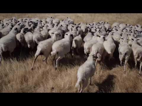 CPO - Nuestro Video Corporativo
