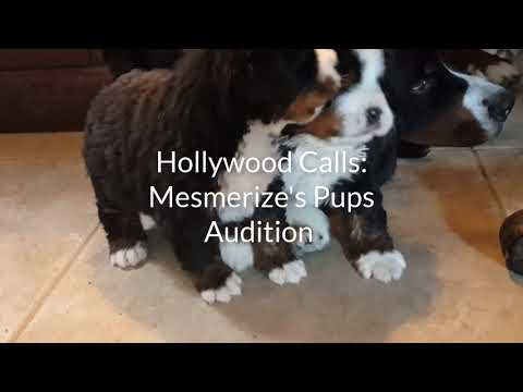 Puppies are Full of Surprises - Mesmerize's  Pups
