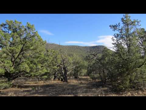 640 acres Quemado, NM