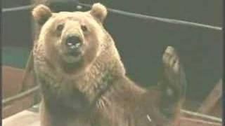 Nonton Semi Pro The Full Bear Wrestling Scene Film Subtitle Indonesia Streaming Movie Download