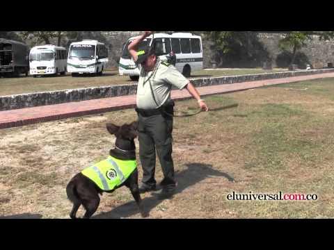 Los caninos también tienen su cuota para la seguridad de Cartagena en la VI Cumbre de las Américas.