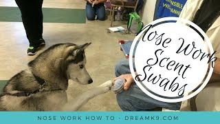 Video How to make Scent Swabs for Nose Work - DreamK9.com MP3, 3GP, MP4, WEBM, AVI, FLV Juli 2017