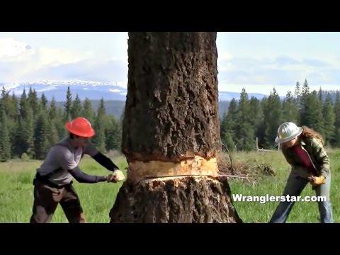 Couple Fells Giant Tree With Axe