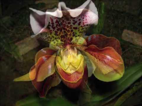 Orchideen Ausstellungen: