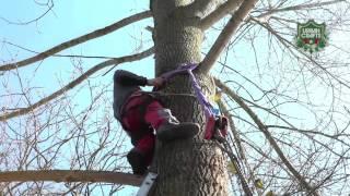 Bruno & Nicolas – building treehouses