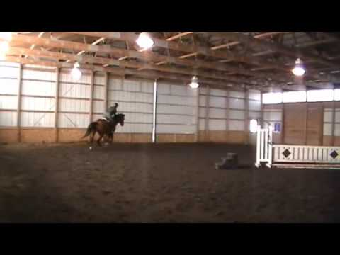 Sparky schooling 1