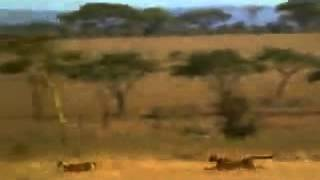 VIDEO WASAP (50) Uno De Bilbao Cazando