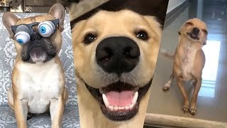 Video If You Don't LAUGH, you will BE Very LUCKY (ANIMALS EDITION) YLYL MP3, 3GP, MP4, WEBM, AVI, FLV Desember 2018