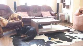 Pes je sám doma
