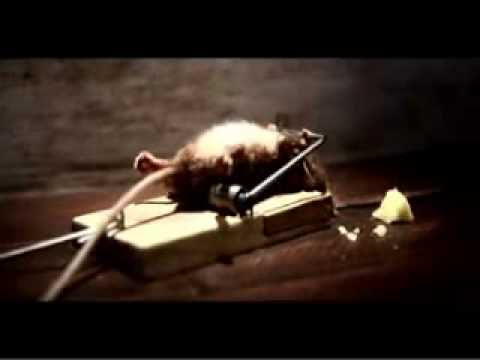 Strong Mouse Bench Pressing Mouse Trap