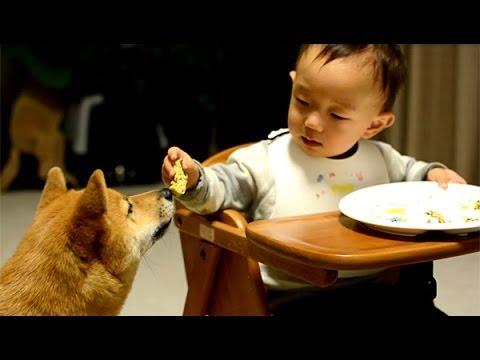 聰明的小baby,把自已不要吃的食物,一個一個扔給狗吃= =+