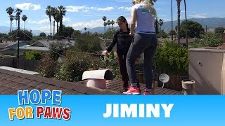 Rescue on the roof requires causing some damage, but it all works out! by Hope For Paws